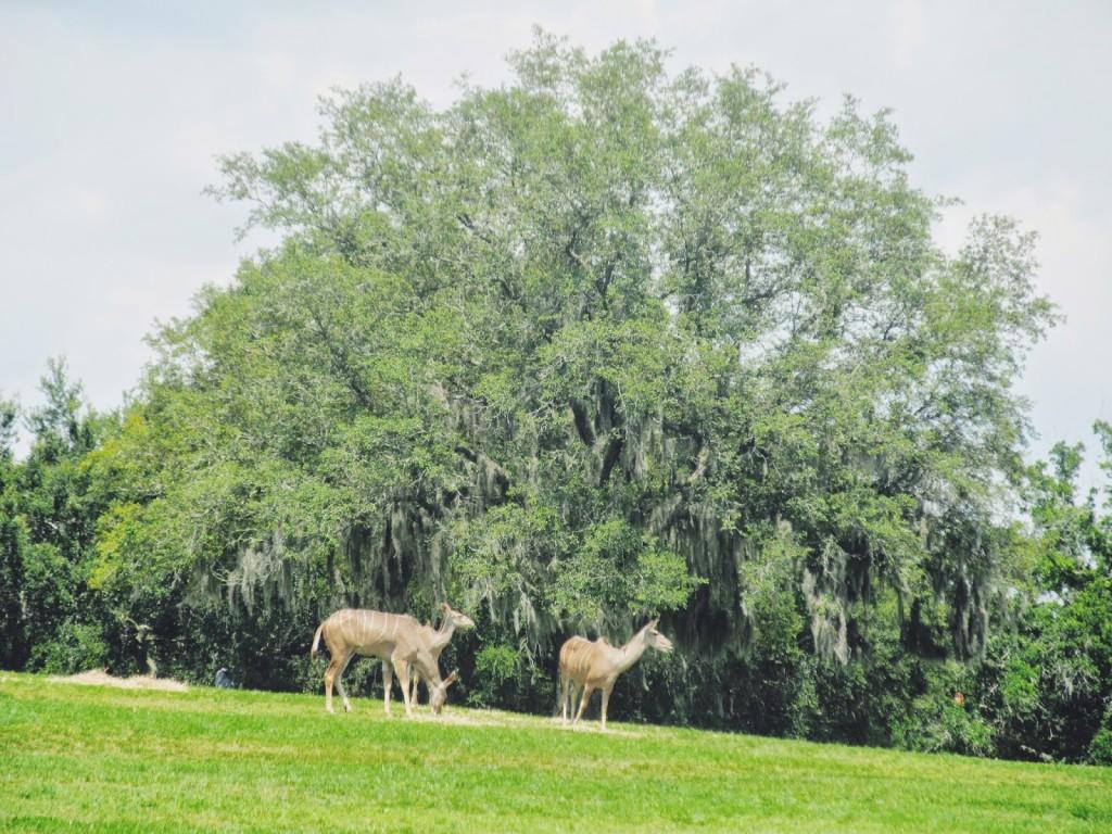 Busch Gardens Animals