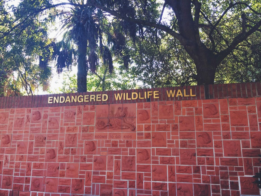 Lowry Park Zoo Endangered Wildlife Wall