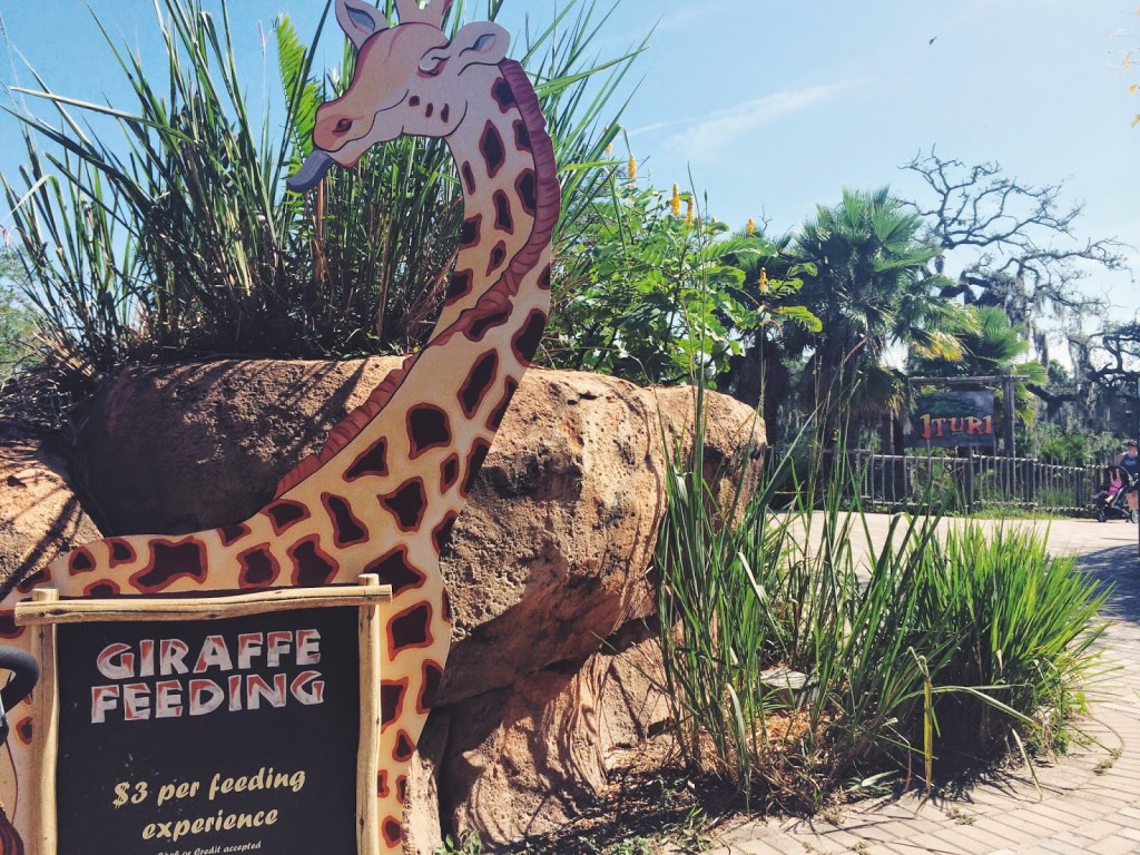 Lowry Park Zoo Giraffe Feeding