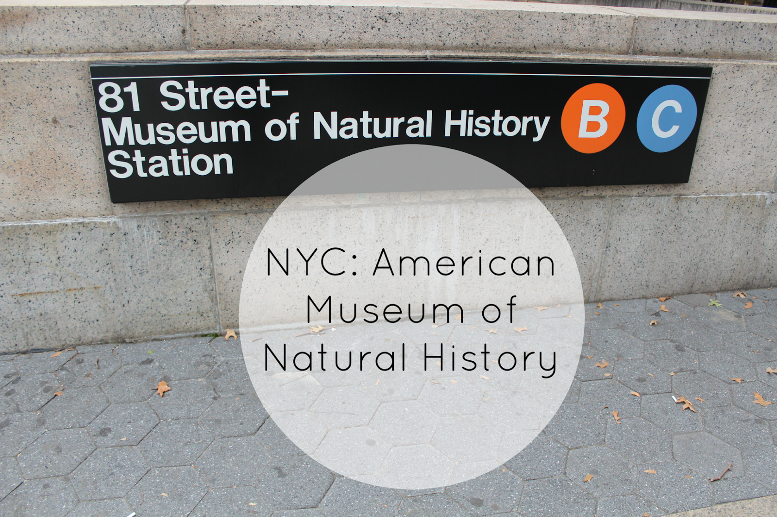The-American-Museum-of-Natural-History-1