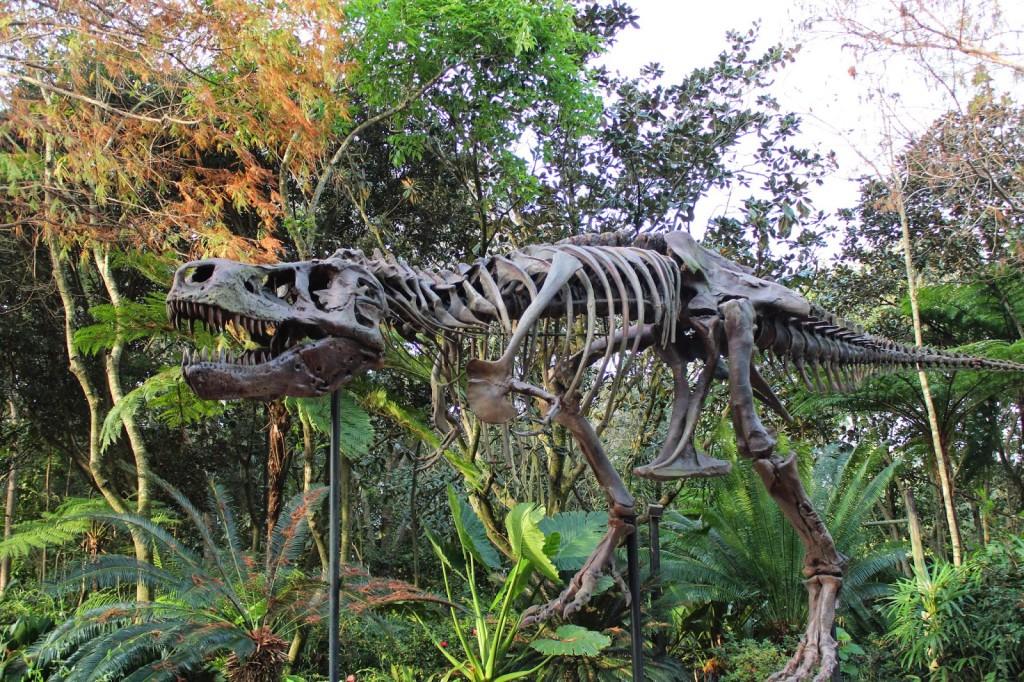Animal Kindgom Dino land USA