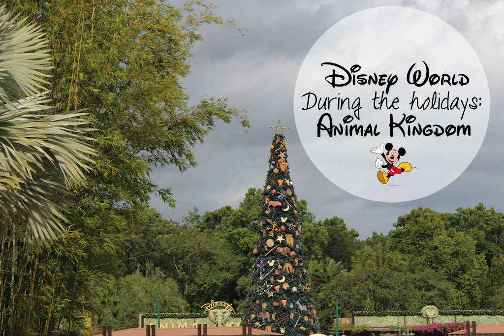 Disney World Animal Kindgom During Christmas