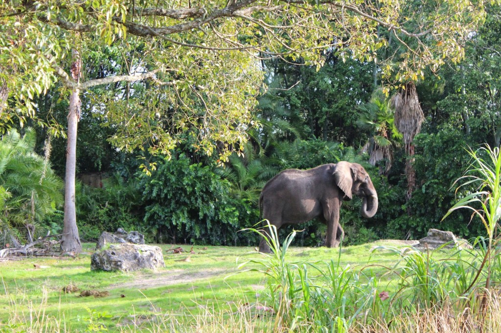 Disney World Animal Kingdom Elephant