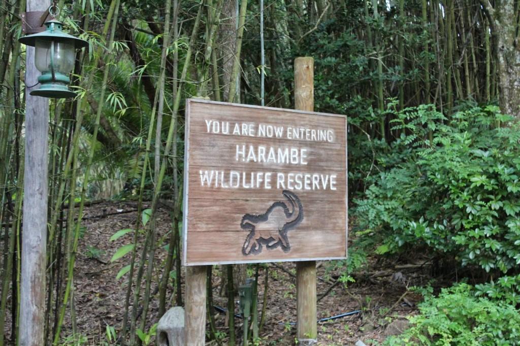 Disney World Animal Kingdom Harambe Wildlife