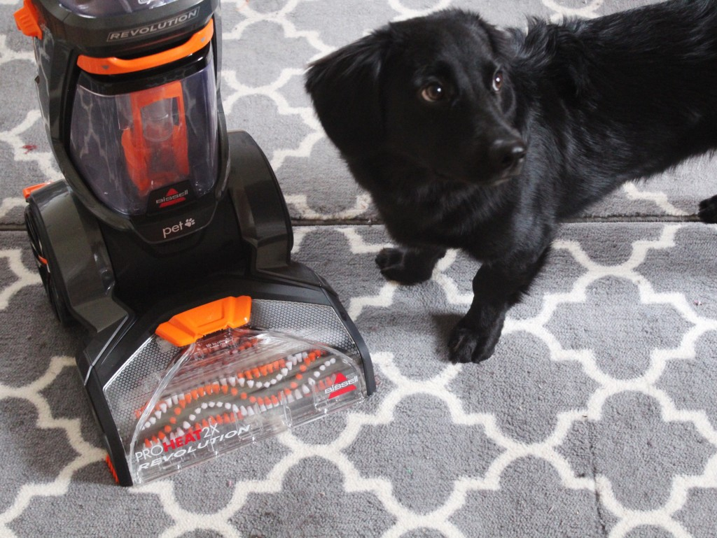best vacuum for getting rid of dog hair. Black Bedroom Furniture Sets. Home Design Ideas