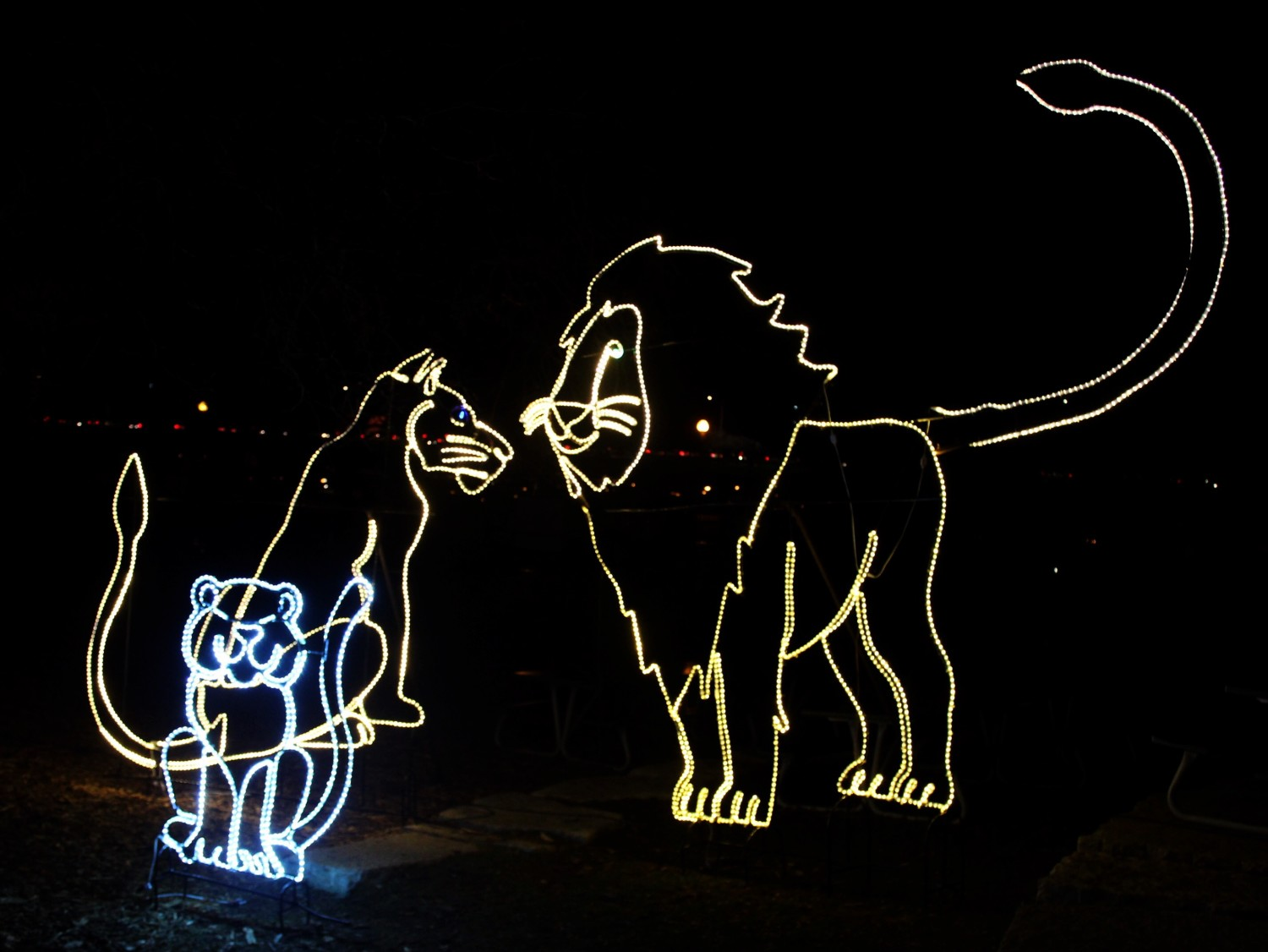 ZooLights Lincoln Park Zoo Lions