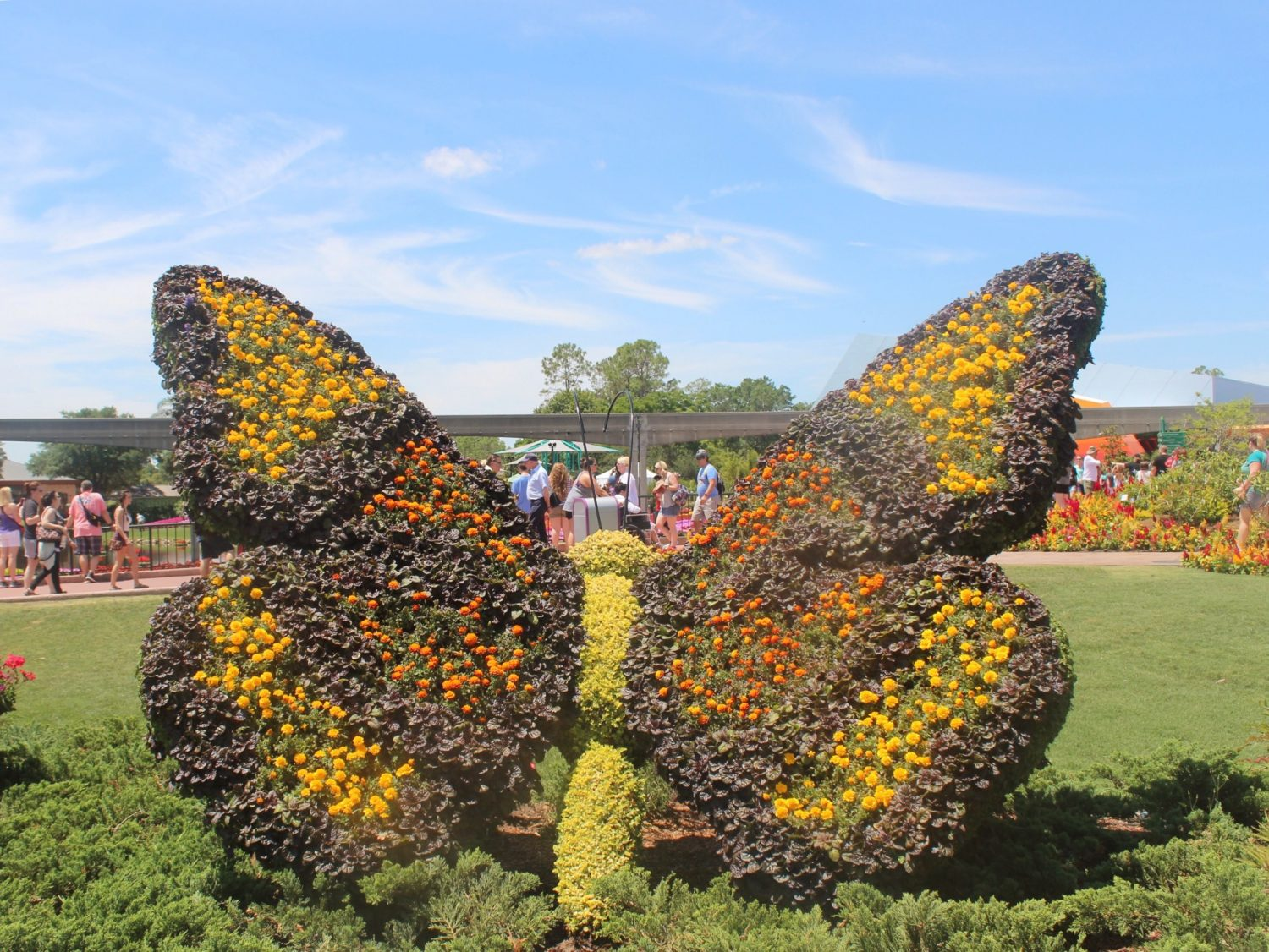 Epcot International Flower and Garden Festival Butterfly