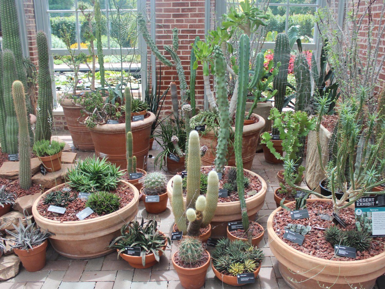 Missouri Botanical Garden Cactus