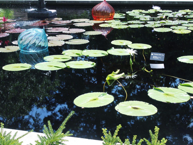 Missouri Botanical Garden Water Lily