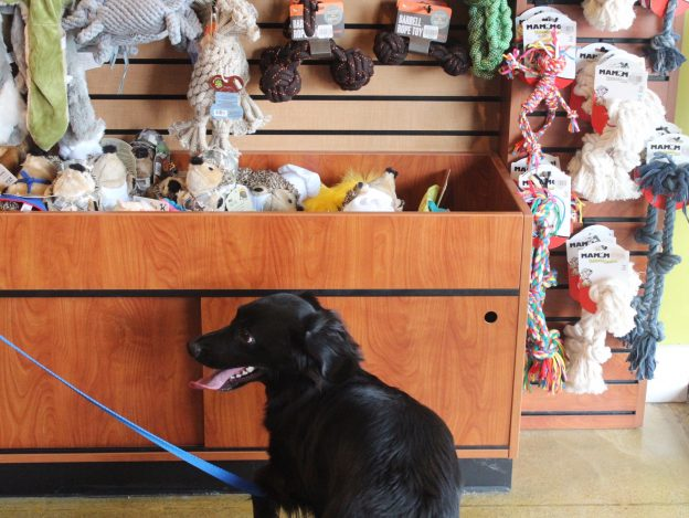 krisers-pet-store-chicago