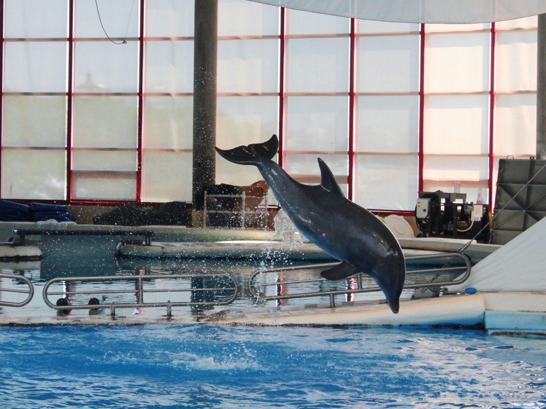 National Aquarium Dolphin Show