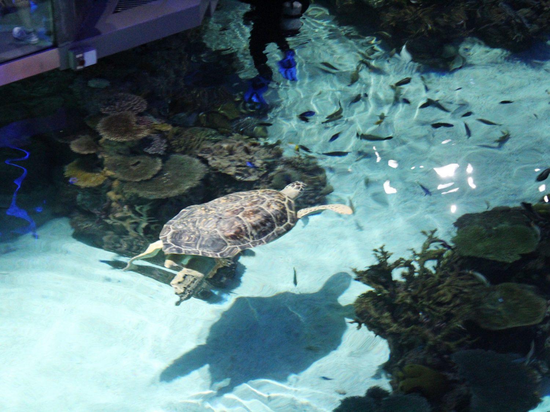 National Aquarium Turtles