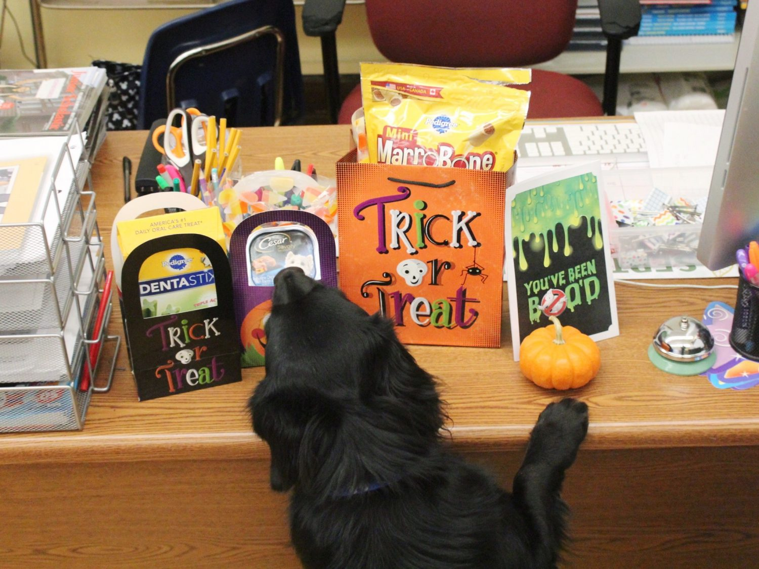 halloween-treats-for-dogs