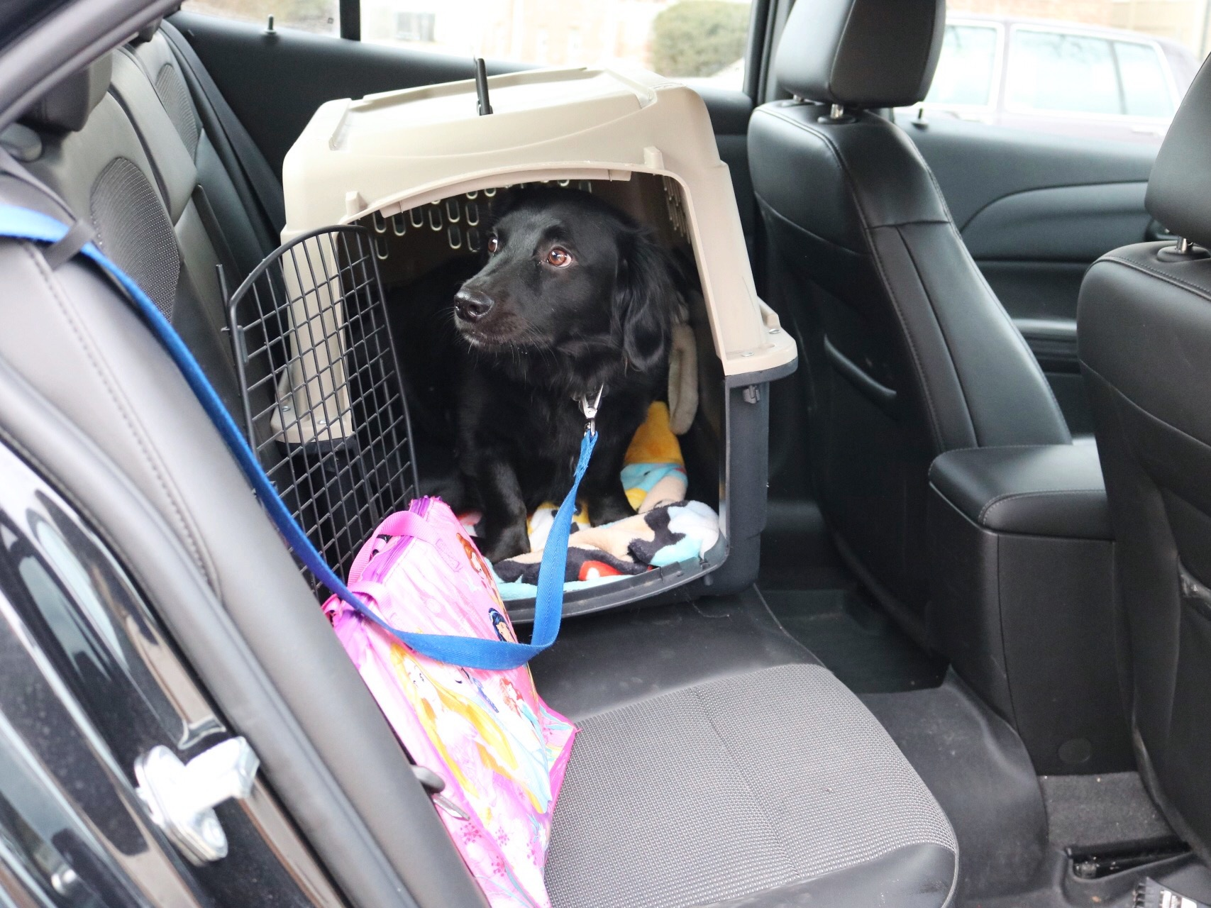 13 Tips for Traveling with Pets