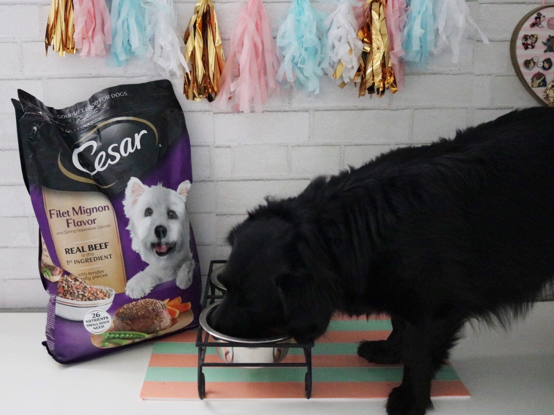 CESAR® Dry Food