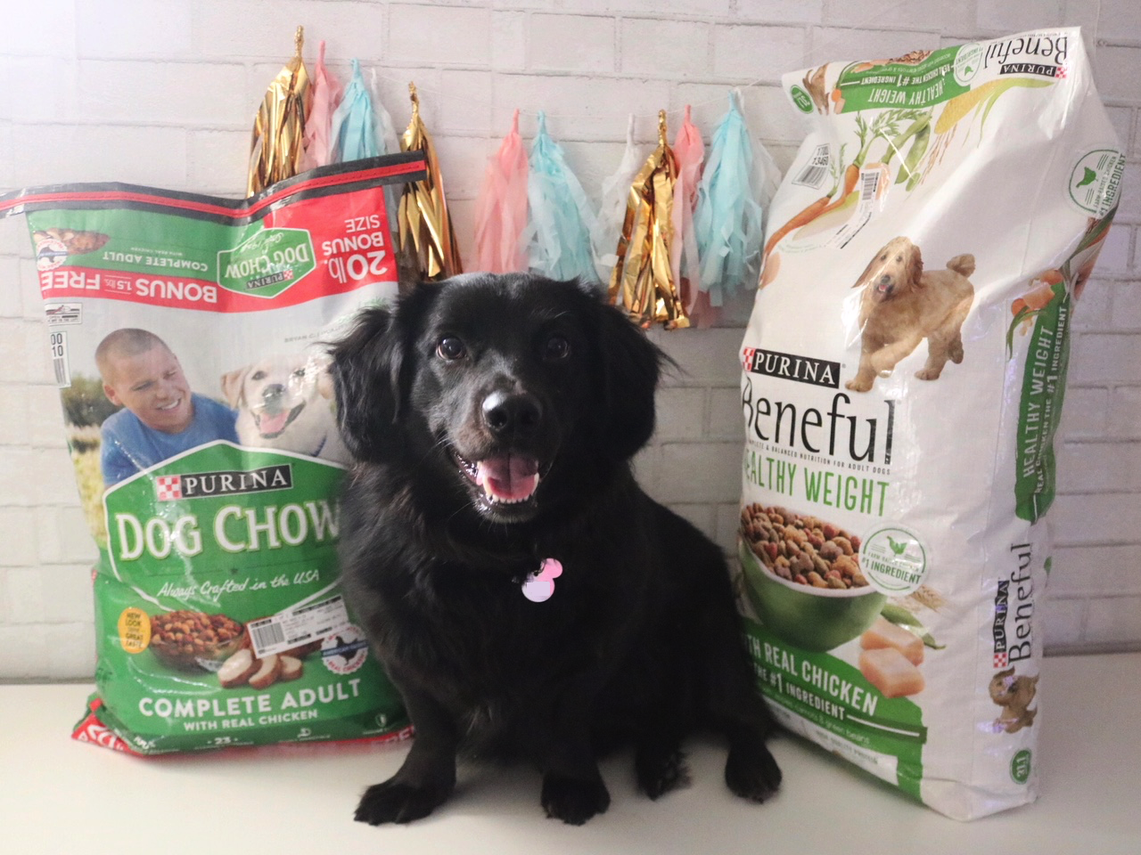 Why You Should Re-Think What You're Feeding Your Dog
