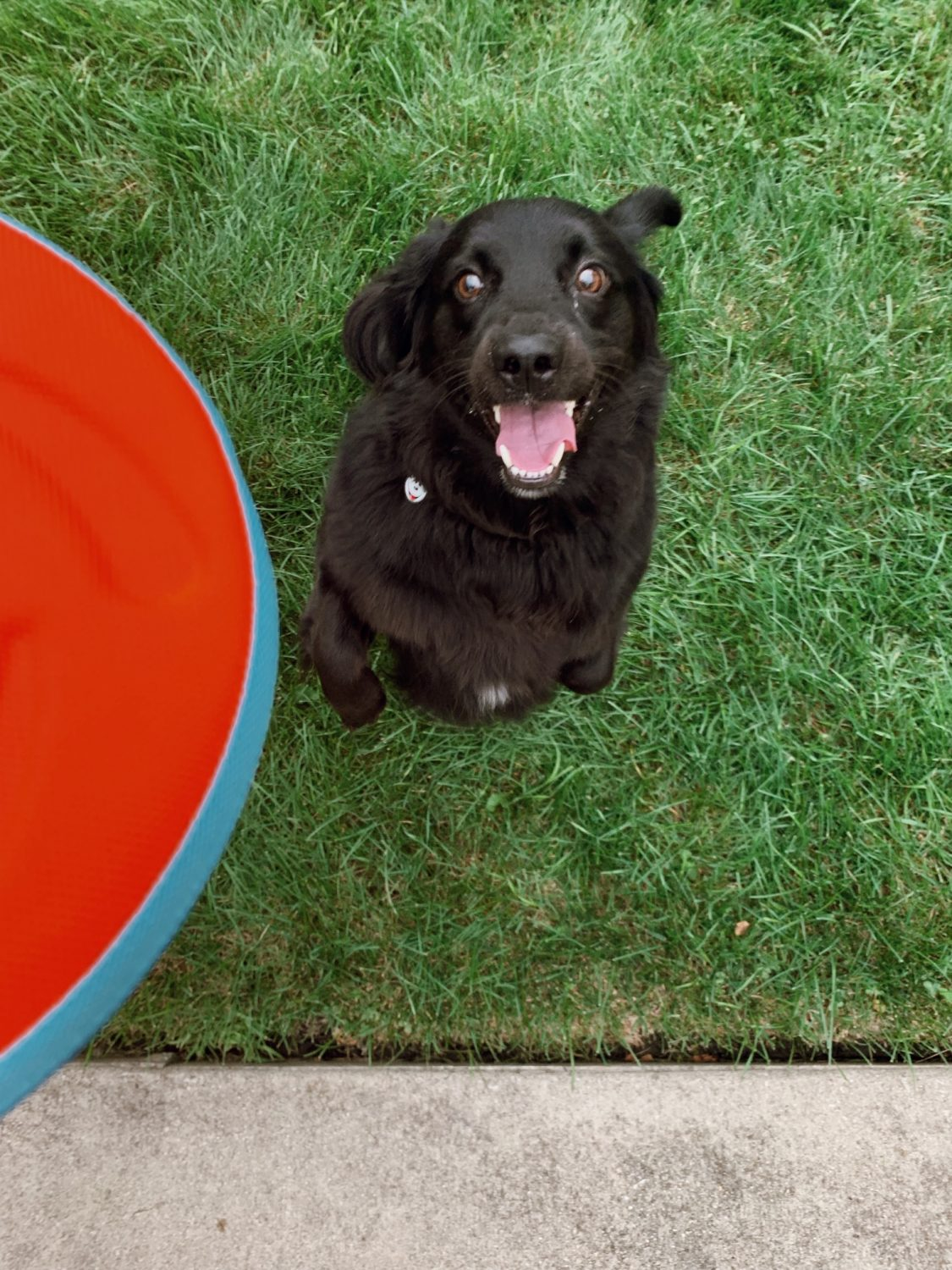 Celebrating National Fetch Day with Chuckit!