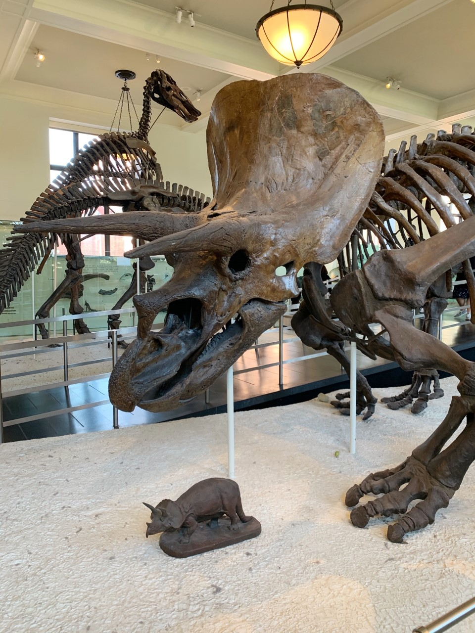 What to Do, Eat and See in NYC: American Museum of Natural History